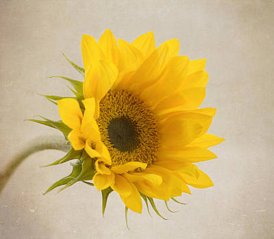 Yellow Flower Photograph - I See Sunshine by Kim Hojnacki