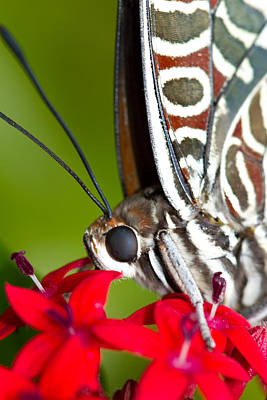 Art Print featuring the photograph I See You Butterfly by John Hoey