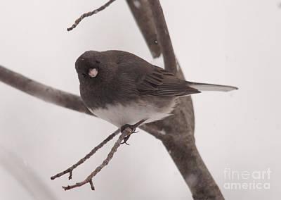 Winter Scene. Winter Landscape. Snow Landscape. Black And White. Birds Photograph - I See You by Cheryl Baxter