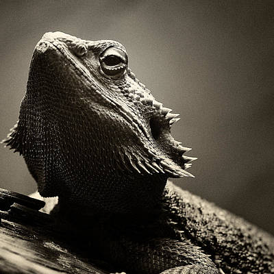 Reptiles Photograph - I See You by Chris McPhee