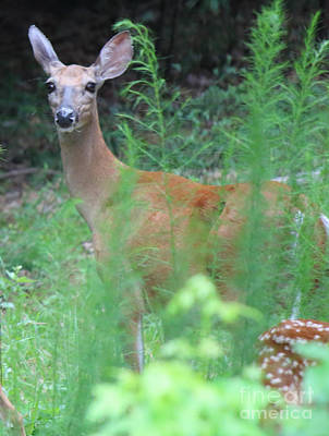 Photograph - I See You - Deer by Jackie Farnsworth
