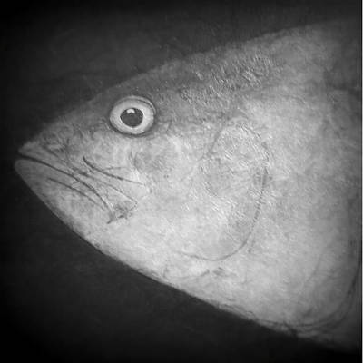 Photograph - I See You - Fish by Patricia Januszkiewicz