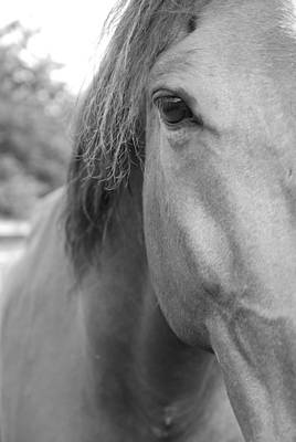 Black Horse Photograph - I See You by Jennifer Ancker