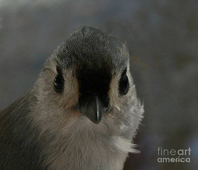 Tufted Titmouse Digital Art - I See You by Jinx Farmer