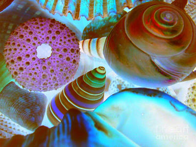 Art Print featuring the photograph I Sell Seashells Down By The Seashore by Janice Westerberg