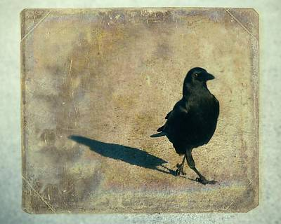 American Crow Photograph - I Walk Alone by Gothicrow Images