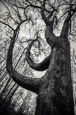 I Will Bend But I Wont Break Art Print by Off The Beaten Path Photography - Andrew Alexander