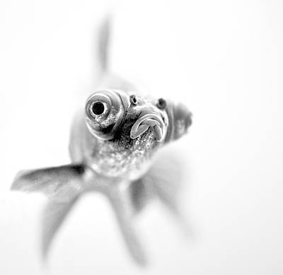 Fish Photograph - I'm Ready For My Close Up... by Paul