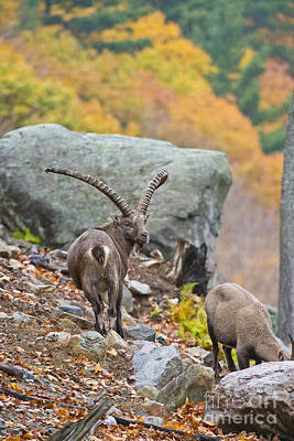 Garden Fruits - Ibex Pictures 174 by World Wildlife Photography