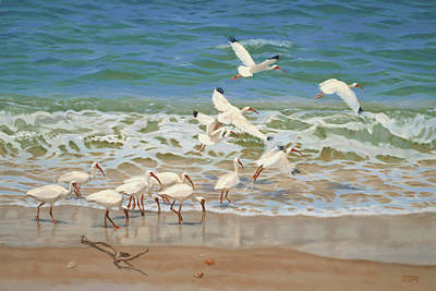 Ibis Beach Original by Don  Ray