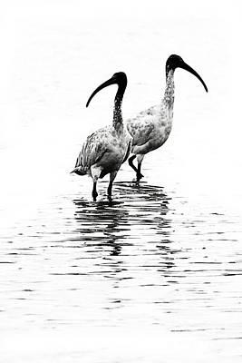 Ibis Art Print by David Benson