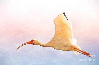 Photograph - Ibis In Flight by Kerri Farley