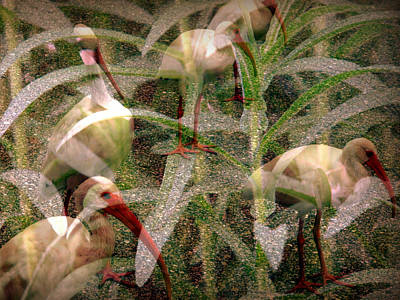 Suggestive Photograph - Ibis In The Tall Grass by Irma BACKELANT GALLERIES