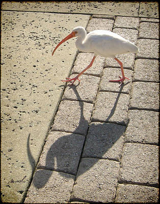Ibis Digital Art - Ibis by The Art of Marsha Charlebois