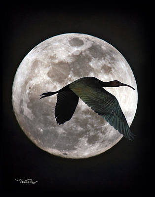 Ibis Digital Art - Ibis Moon by David Salter