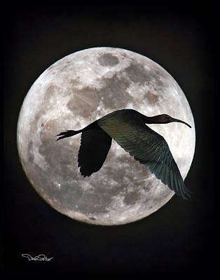 Ibis Digital Art - Ibis Moon by David Salter
