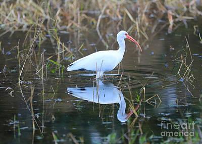 Photograph - Ibis Pond by Carol Groenen