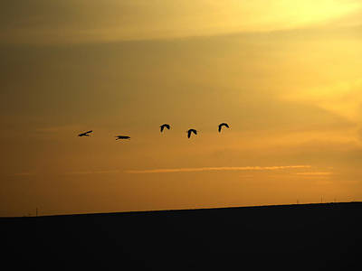 Photograph - Ibis Sunrise by Ernie Echols