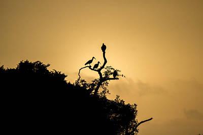 Photograph - Ibis Sunrise by Havard Rosenlund