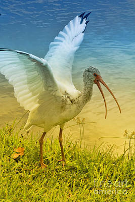 Thoth Photograph - Ibis Talking by Deborah Benoit