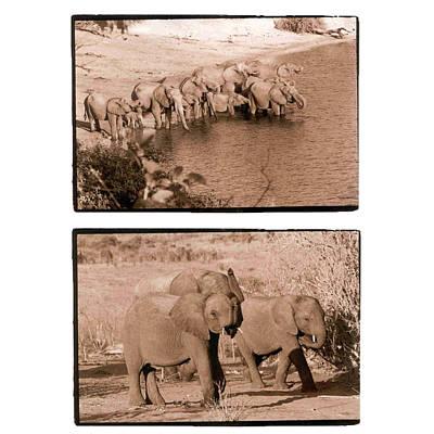 Photograph - Elephants by Nancy Ingersoll