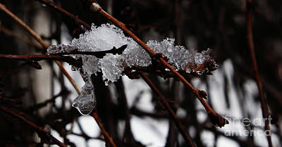 Photograph - Ice 3 by Linda Shafer