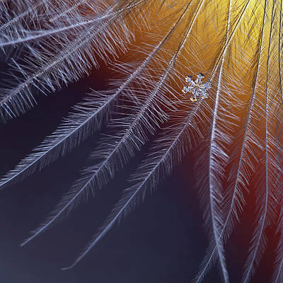 Ice Crystal Photograph - Ice And Flame by Elena Solovieva