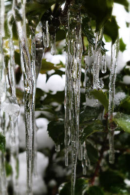 Photograph - Ice And Holly by Scott Hovind