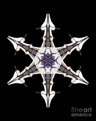 Wall Art - Photograph - Ice And Salvia Snowflake I by Karen Jordan Allen
