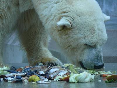Ice Bear Snacking Art Print by Hildie Hofmann