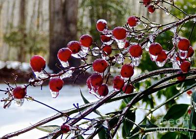 Photograph - Ice Berries by Jean Wright