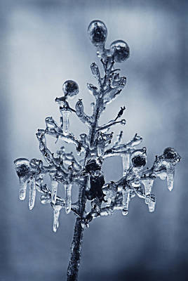 Photograph - Ice Bouquet by Linda Segerson