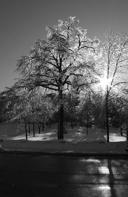 Ice Cold Sun Art Print by Maude Demers