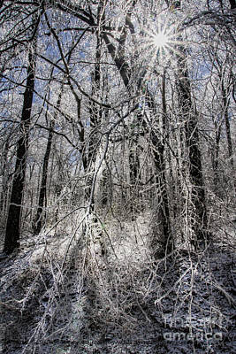 Photograph - Ice Covered Trees by Barbara Bowen