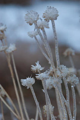 Photograph - Ice-covered Winter Flowers by Cascade Colors