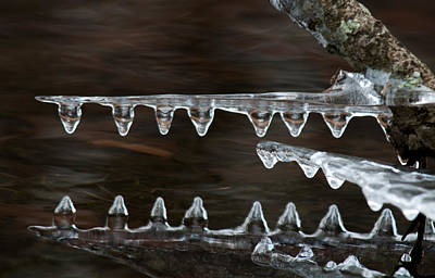 Crocodile Photograph - Ice Crocodiles by Lara Ellis