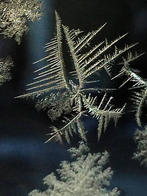 Photograph - Ice Crystals by Shane Bechler