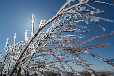 Cold Temperature Photograph - Ice Crystals On Tree Branches, Iceland by Panoramic Images