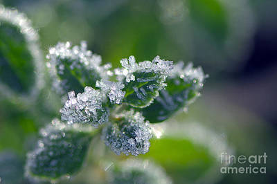 Photograph - Ice Crystals With Stars by Sharon Talson