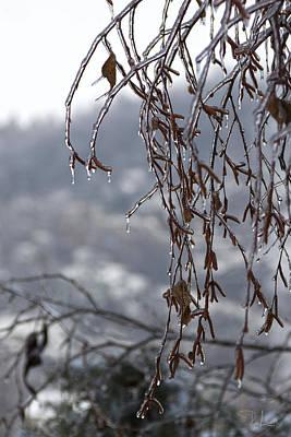 Photograph - Ice Drops by Raffaella Lunelli