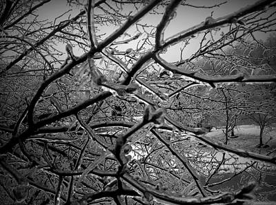 Photograph - Ice Encasement by Van Corey