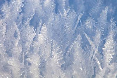 Ice Crystals Photograph - Ice Feathers by Ashley Cooper
