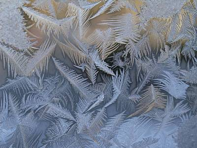 Photograph - Ice Feathers by Patricia McKay