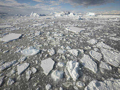 Brash Photograph - Ice Floes Antarctica by Gerry Ellis