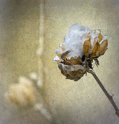 Ice Flower Art Print by Angie Vogel