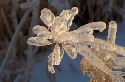 Photograph - Ice Flower by Douglas Pike