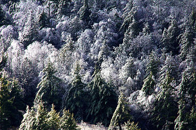 Photograph - Ice Forest by Tom Culver