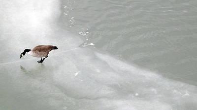 Photograph - Ice Goose by Joyce  Wasser