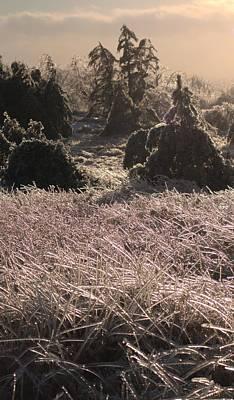 Photograph - Ice Grass by Douglas Pike