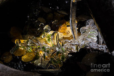 Photograph - Ice Ice Baby by Jim McCain